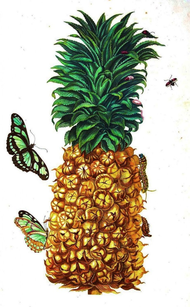 Botanical - Fruit - Pineapple with butterflies