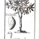 Botanical - Snakes found in nuts according to the French