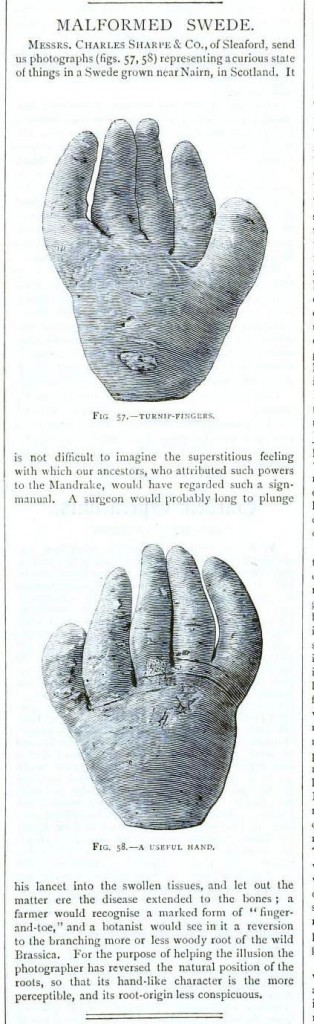 Botanical - Turnip fingers