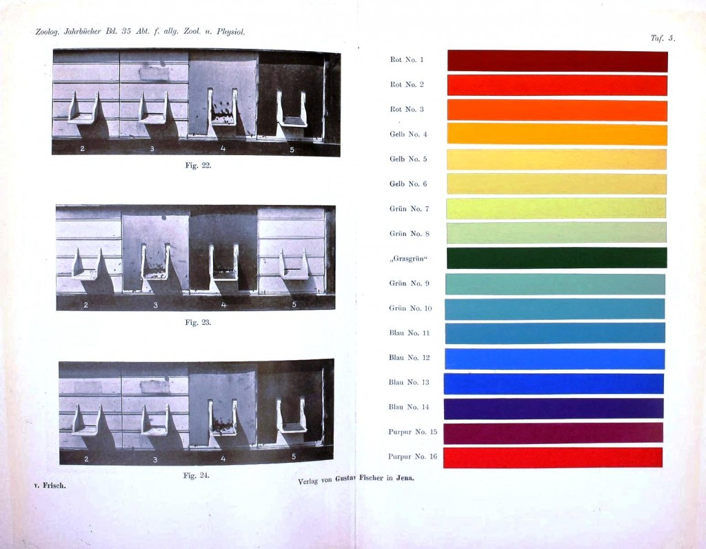 Color - Multi - color - Color vision chart, insect