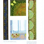 Design - Paper - Art nouveau abstract - (3)