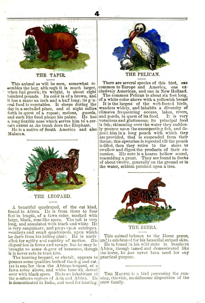 Juvenile -  Educational plate - Animal, Tapir, pellican, leopard, zebra