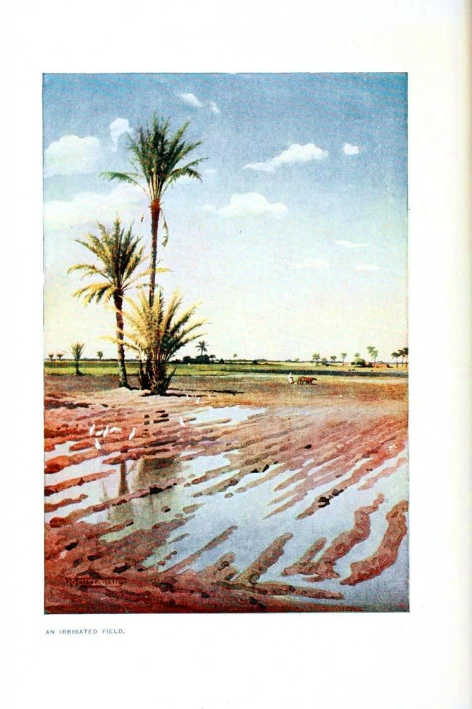 Landscape - Painting - Irrigated field, Egypt