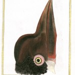Animal - Animal head - Bird - Martinet - Animal head - Bird beak