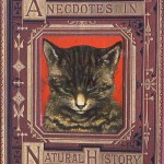 Animal - Animal head - Cat - Book Cover