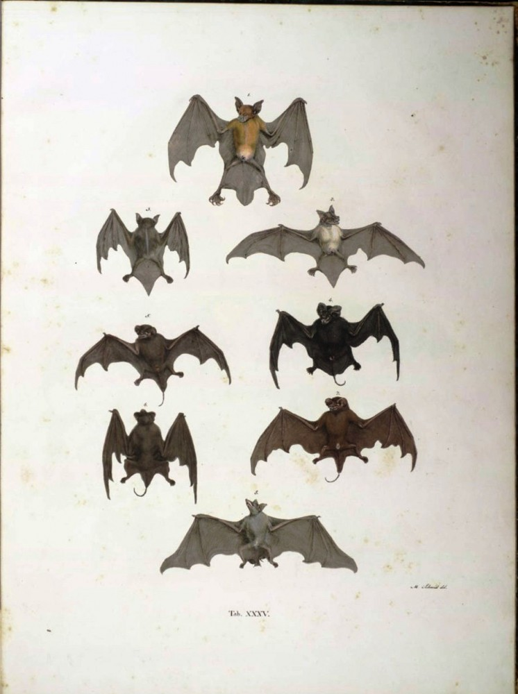 Animal - Bat - Educational Plate Flying (1)
