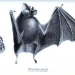 Animal - Bat - Full body (1)