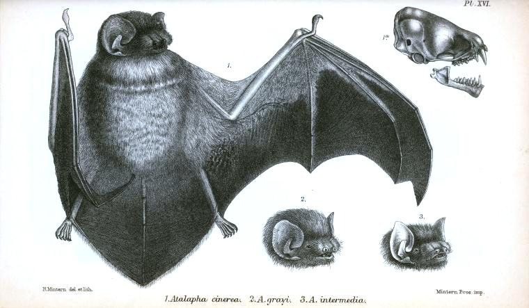 Animal - Bat - Full body (3)