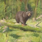 Animal - Bear - Brown bear