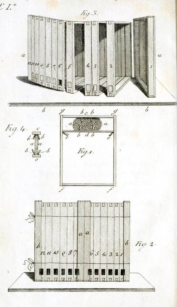 Animal - Bees - Bee hive drawing - French 1800s