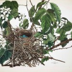 Animal - Bird - Bird's nest - (11)