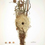 Animal - Bird - Bird's nest - (20)