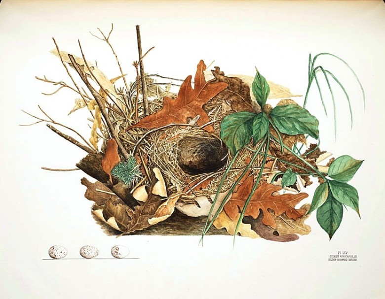 Animal - Bird - Bird's nest - (24)