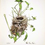 Animal - Bird - Bird's nest - (4)