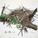 Animal - Bird - Bird's nest - (7)