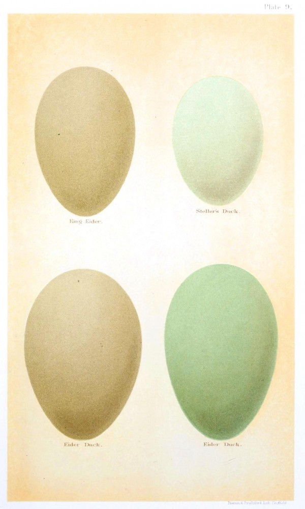 Animal - Bird - Eggs and nests - British Birds -   (12)