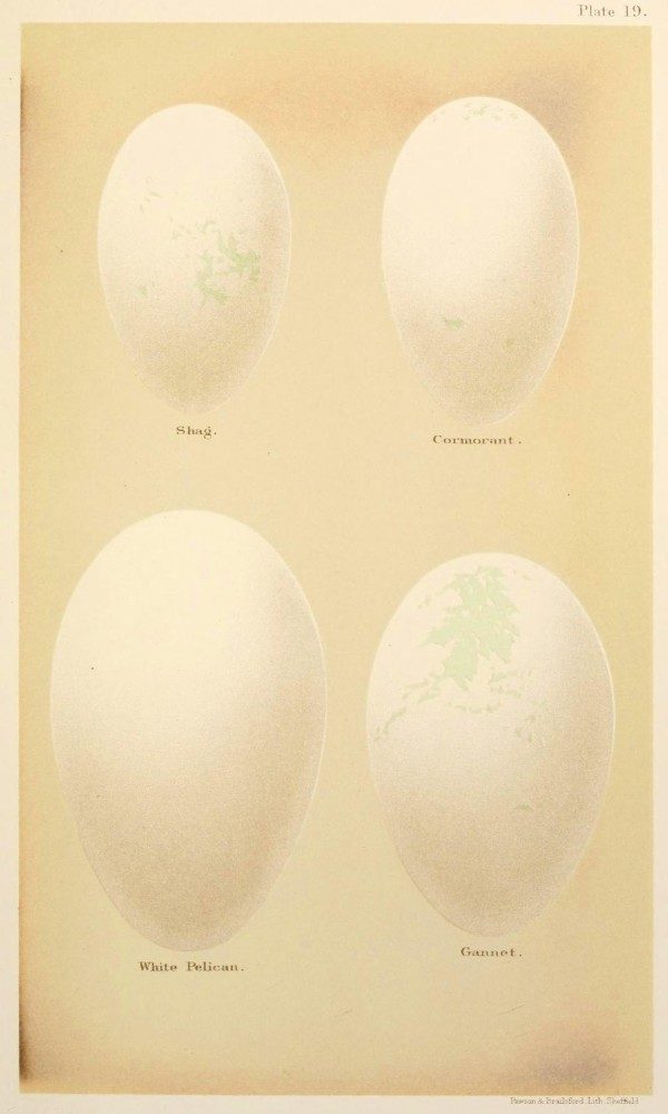 Animal - Bird - Eggs and nests - British Birds -   (22)