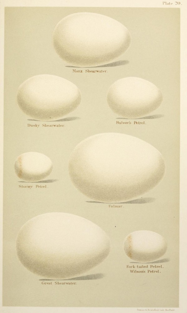 Animal - Bird - Eggs and nests - British Birds -   (23)