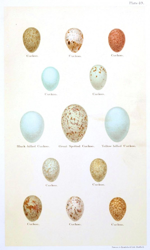 Animal - Bird - Eggs and nests - British Birds -   (3)