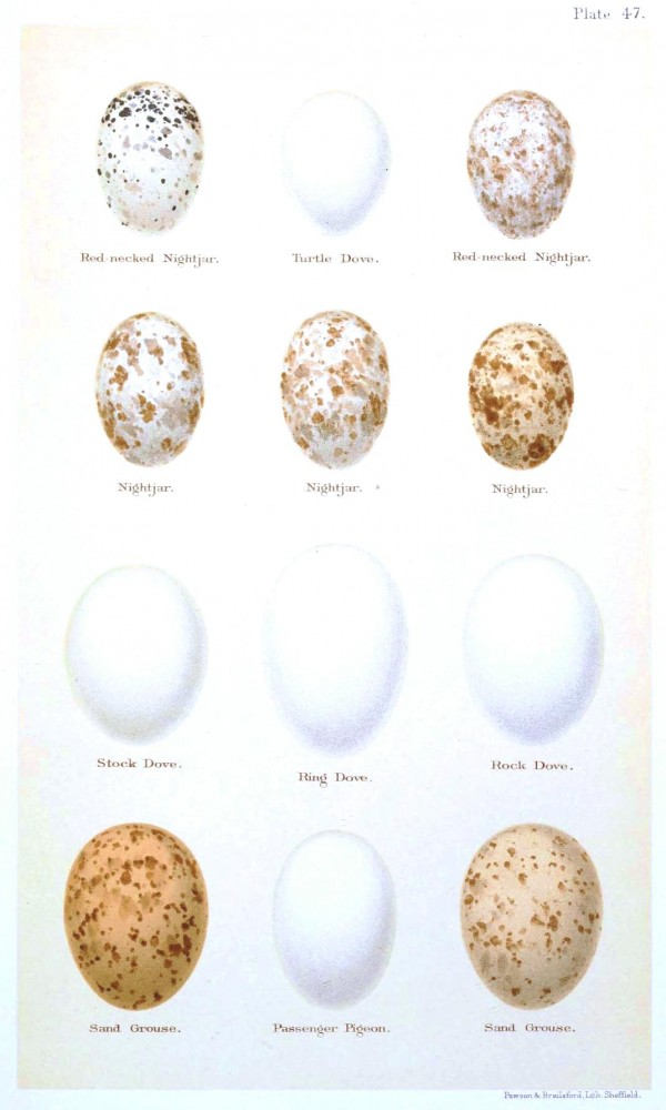 Animal - Bird - Eggs and nests - British Birds -   (32)