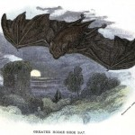 Animal - British mammal (1896) - Bat and full moon