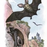 Animal - British mammal (1896) - Bat in a cave