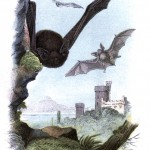 Animal - British mammal (1896) - Castle and bats