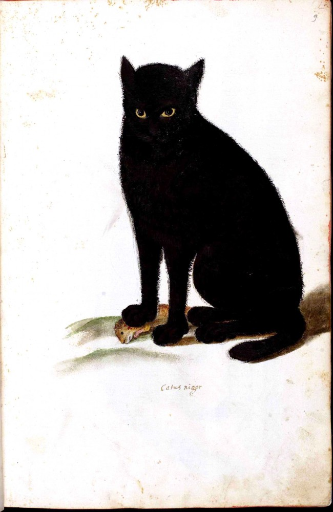 Animal - Cat - Black cat - Italian
