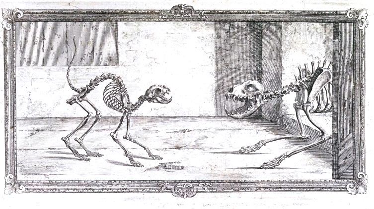 The skeletal structure of a cat and a dog. Osteographia, or the anatomy of the bones.  1733