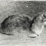 Animal - Cat - Drawing - Cat resting