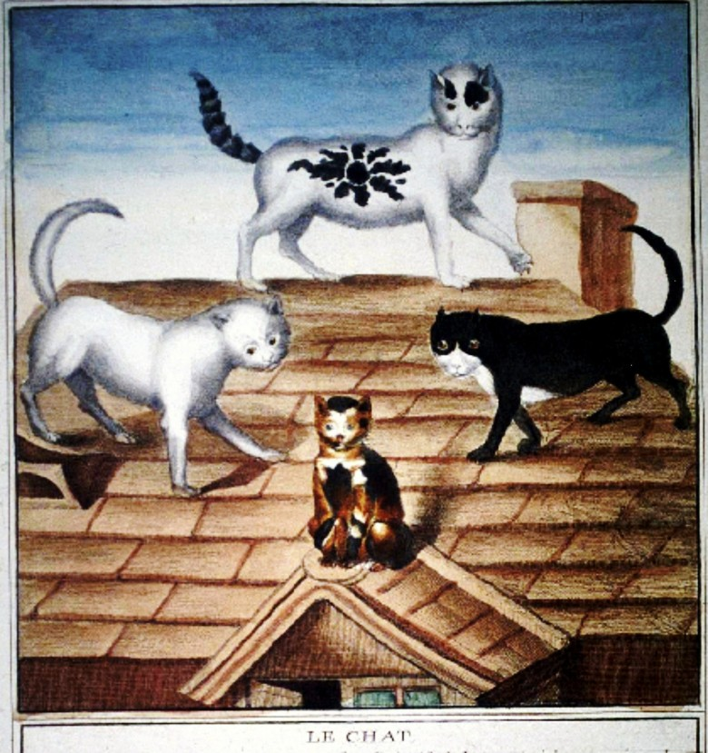 Animal - Cat - French - Housecats on roof