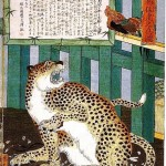 Animal - Cat - Japanese Leopard