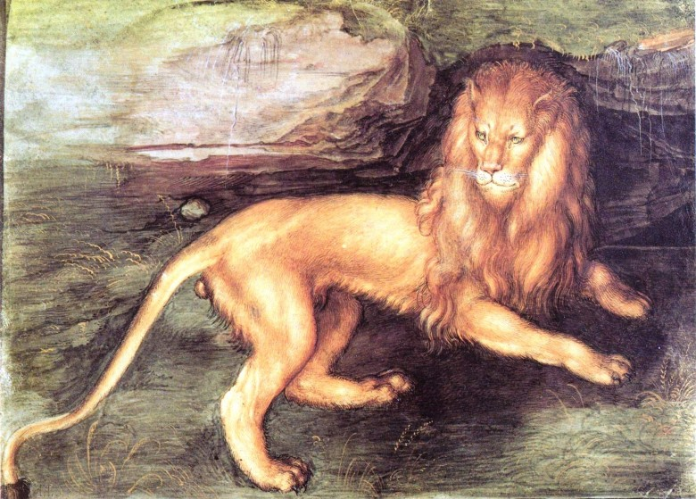 Animal - Cat - Lion -Dürer
