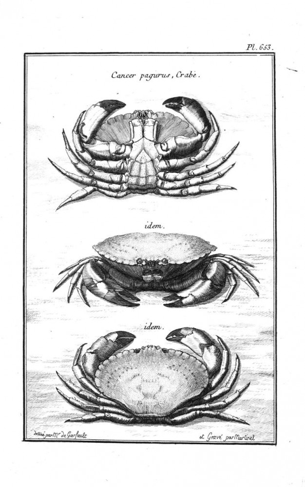 Animal - Crustacean - Crab, black and white