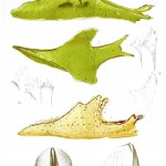 Animal - Curiosity - Nudibranches from Zanzibar and East Africa7
