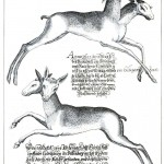 Animal - Deer - Two headed 1603