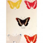 Animal - Design - Butterfly - Printing Technique