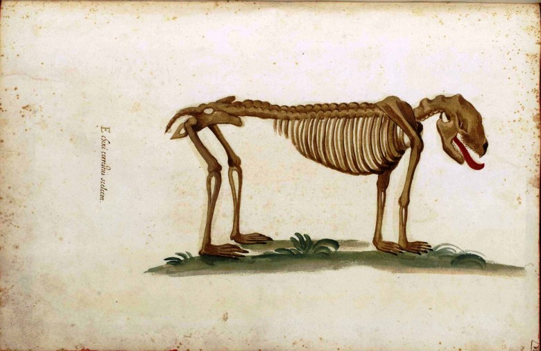Animal - Dog - Anatomy - Italian