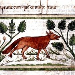 Fox via Wellcome Library
