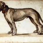 Animal - Dog - Pit Bull - Italian (2)