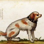 Animal - Dog  wearing collar - Italian