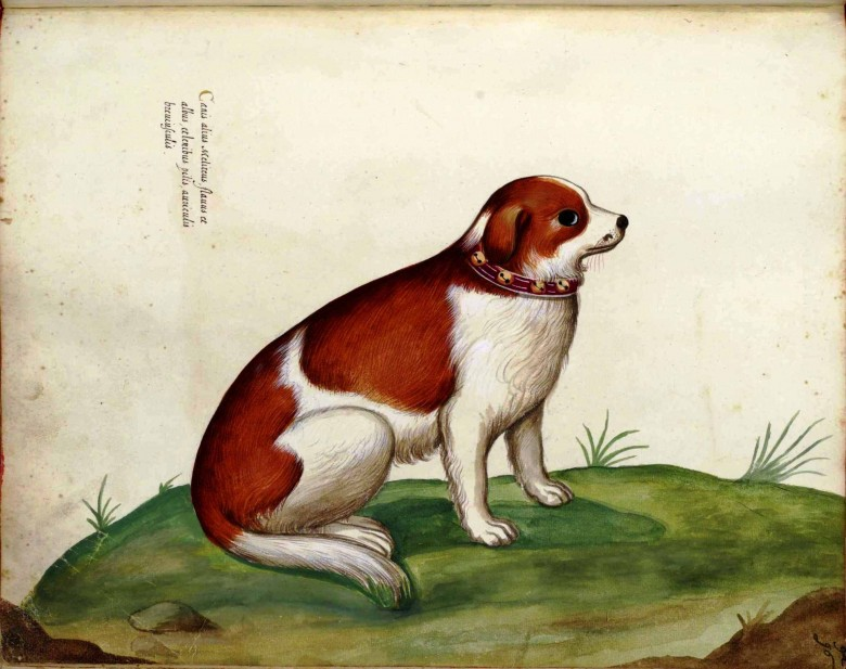 Animal - Dog wearing collar with bells - Italian