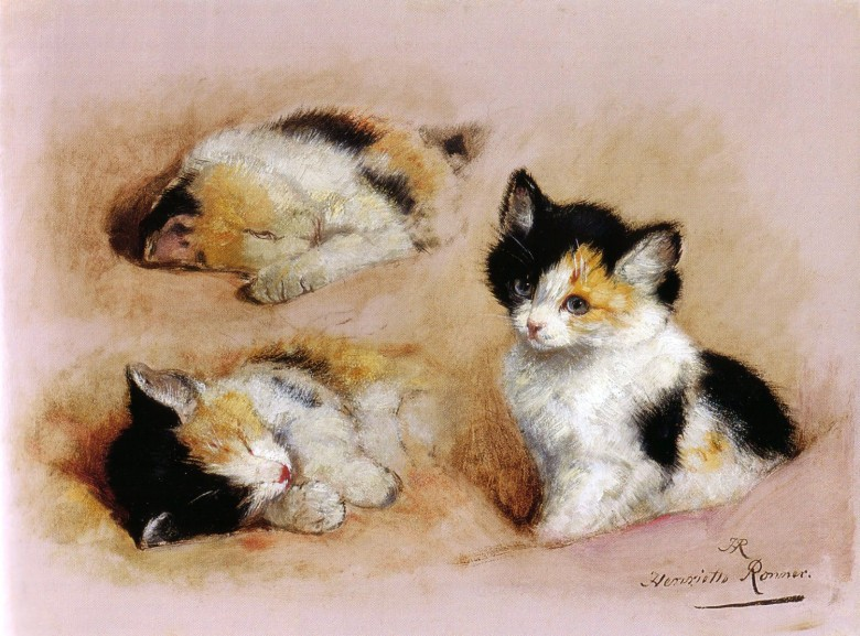 Animal - Drawing - Animal - Cat - Kittens waking up
