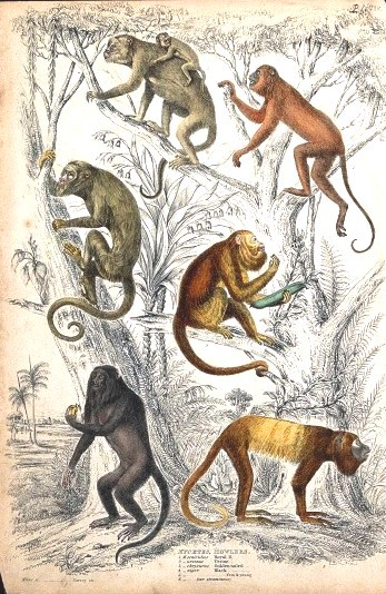 Animal - Educational Plate - Howler Monkeys