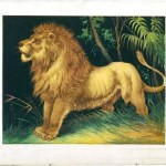 Animal - Feline - Lion illustrated in book
