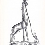 Animal - Giraffe - Historical giraffe (1)