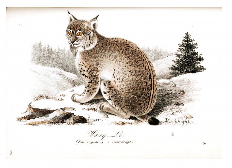 Animal - Illuminerade Figurer - Cat - Lynx winter