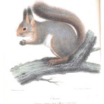 Animal - Illuminerade Figurer - Woodland - Ekorre (Squirrel)