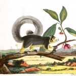 Animal - Indian Zoology - Woodland - Squirrel