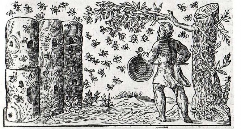 Animal - Insect - Bees - French Apiary 1560